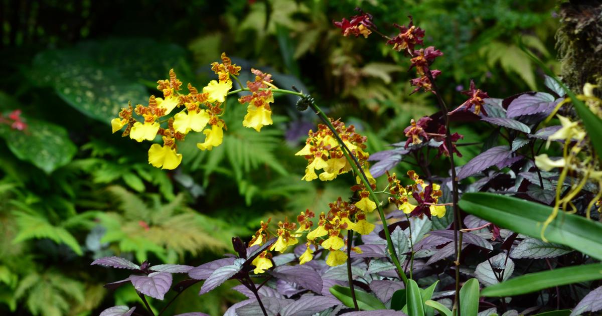 Hawaii Tropical Bioreserve and Garden